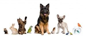 Umzug mit Haustieren