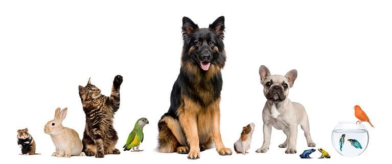 Generelle Tipps für den Umzug mit Haustieren