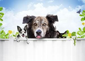 Umzug in die neue Wohnung – Stress für Haustiere