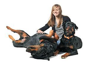 Umzug mit Hunde