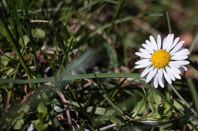Umzug im Frühling - Umziehen bei schönem Wetter