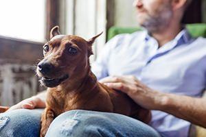 Umzugstipps für Hundebesitzer