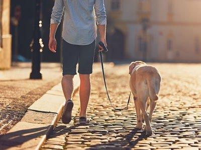 Umzugstipps - Hund anmelden, unmelden oder abmelden