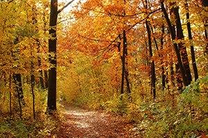 Die besten Umzugstipps für Umzüge im Herbst