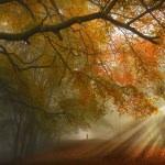 Umzug im Herbst - Umziehen in der goldenen Jahreszeit