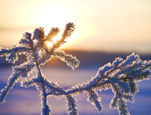 Umzug im Winter – Umziehen in der Kältesten der vier Jahreszeiten