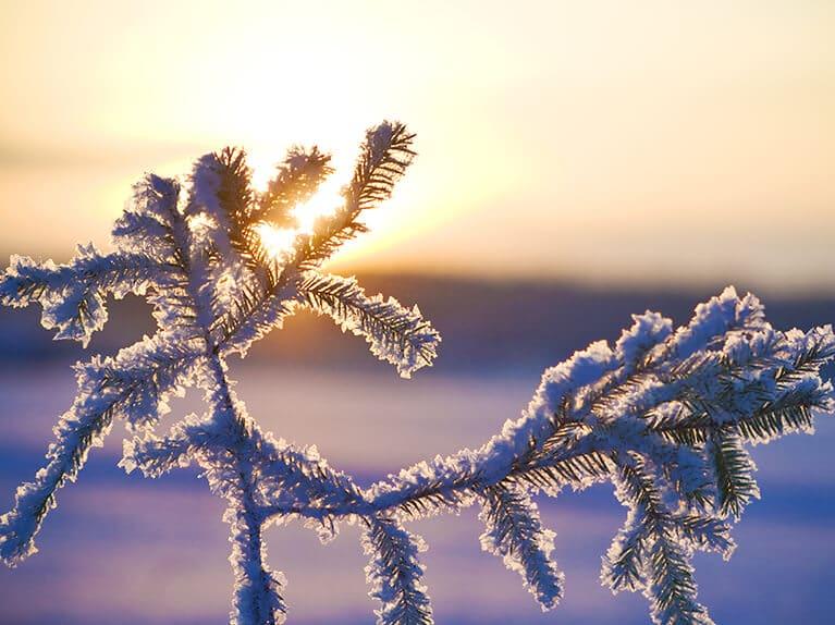 Umzug im Winter - Umziehen in der Kältesten der vier Jahreszeiten