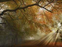 Umzug im Herbst – Umziehen in der goldenen Jahreszeit